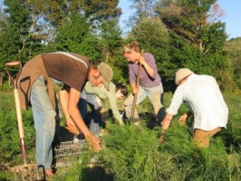 organic farmers image: nofavt.org