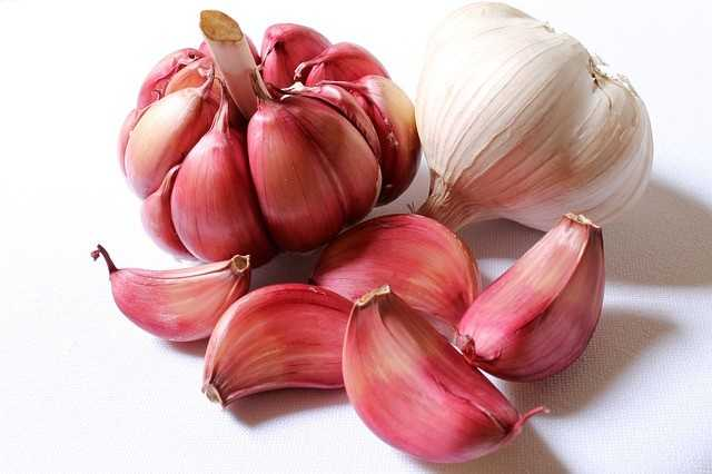 head of garlic and cloves